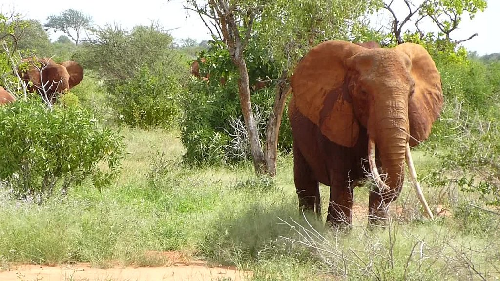 elefanten-299.mp4
